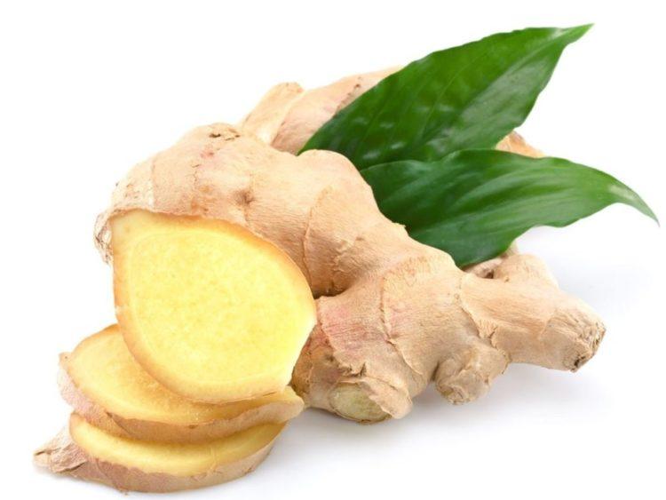 leptospirosis ginger