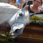 horse funeral FI