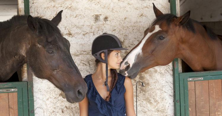 leptospirosis horses