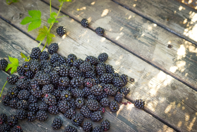 kidney failure diet blackberries