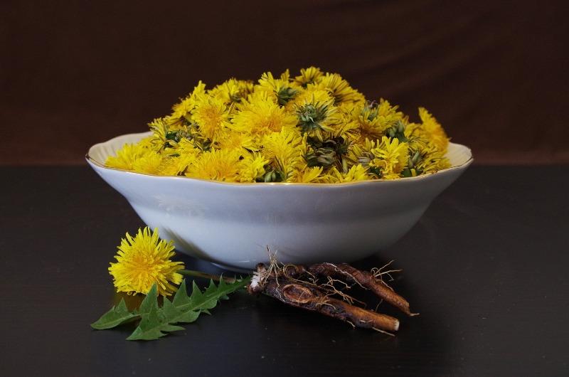 liver disease dandelion root