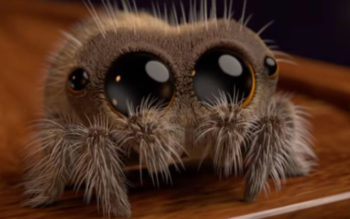 Adorable Spider Video Is Curing People Of Their Arachnophobia