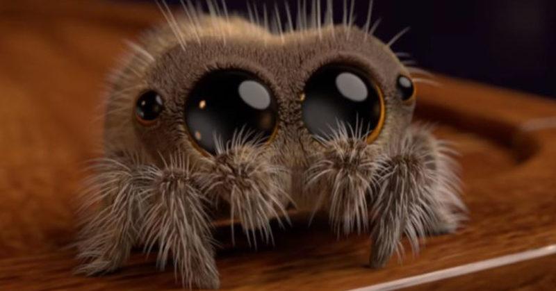 spider lucas adorable arachnophobia cute animated curing davidwolfe named fi ever 1075koolfm