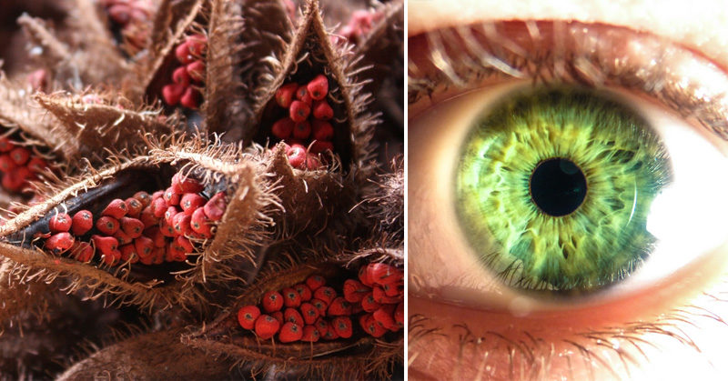 Annatto 7 Health Benefits