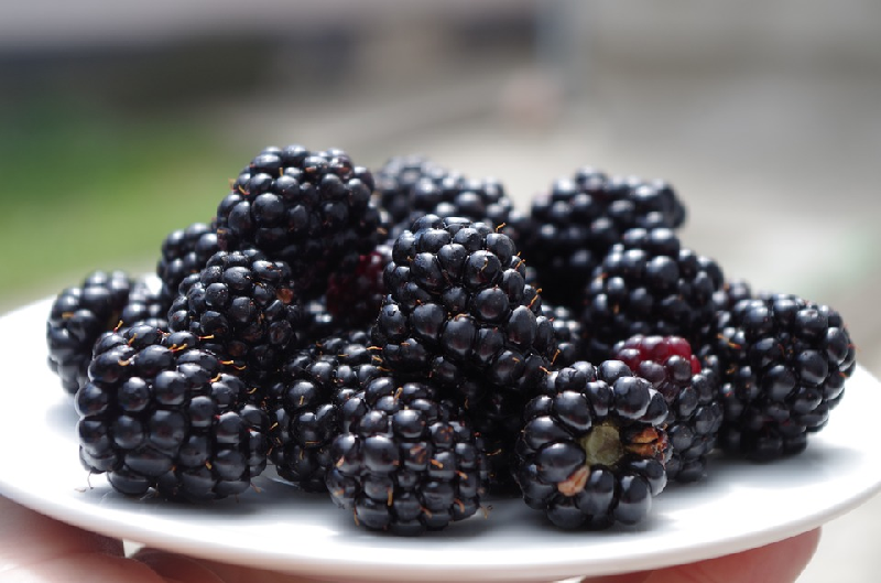 Blackberry health benefits