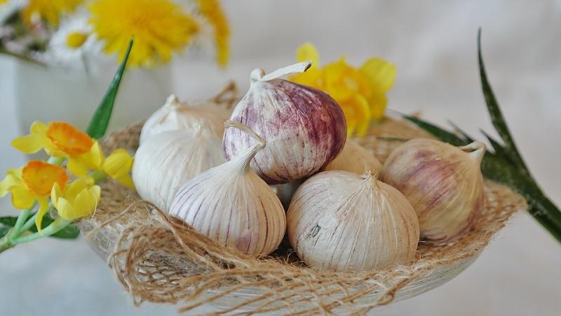 tapeworm garlic