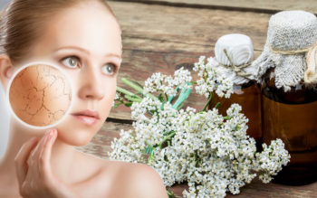Yarrow Essential Oil: 15 Benefits & Uses