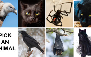 Pick An Animal To Reveal The Hidden Dark Side Of Your Personality