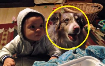 Mom Tries To Get Baby To Say 'Mama' But Dog's Reaction Is Hilarious