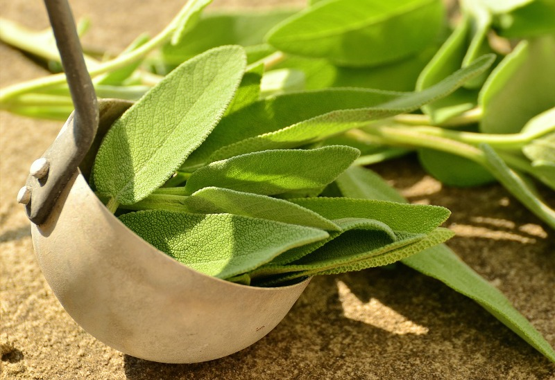 sage essential oil leaves