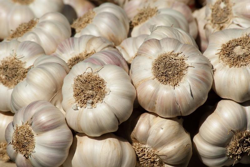 garlic sinus infection treatment