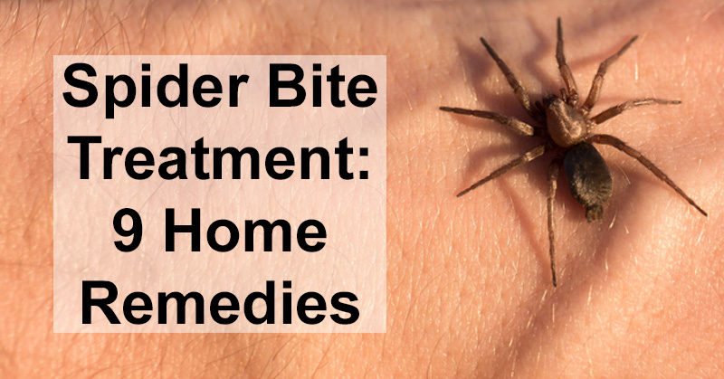 Natural Remedy For Spiders In Home