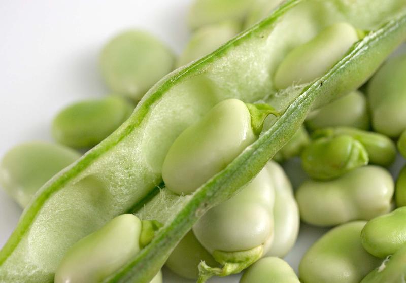 fava beans benefits