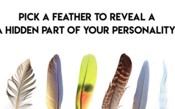 Pick A Feather To Reveal A Hidden Part Of Your Personality