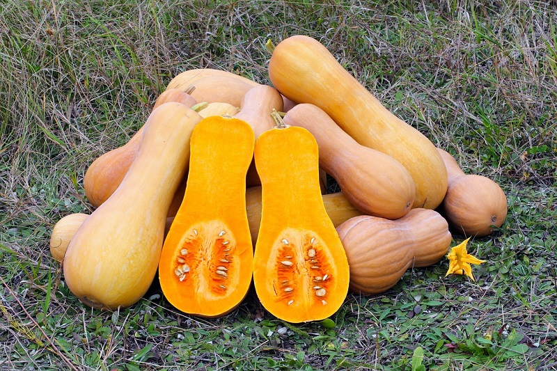 Butternut squash benefits