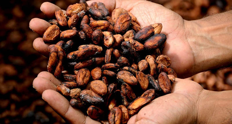 Cacao Nibs Health Benefits