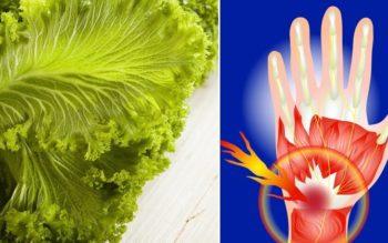 Mustard Greens: 8 Benefits & Uses