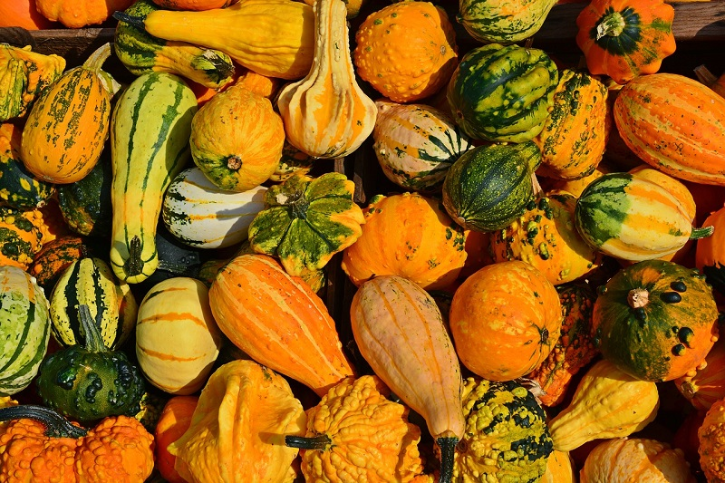 Delicata squash benefits