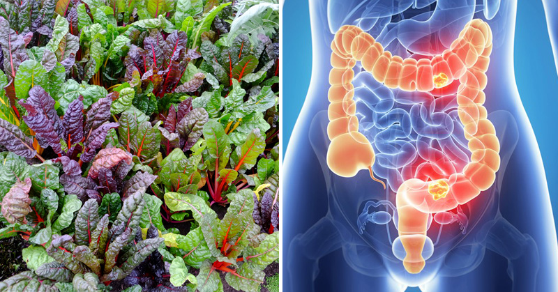 Swiss chard health benefits FI