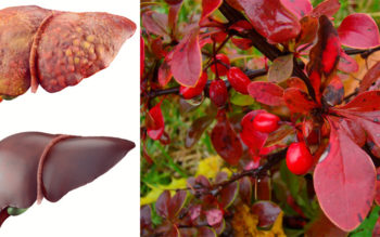 6 Health Benefits Of Barberry