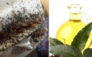 Neem Oil: 4 Benefits & Uses