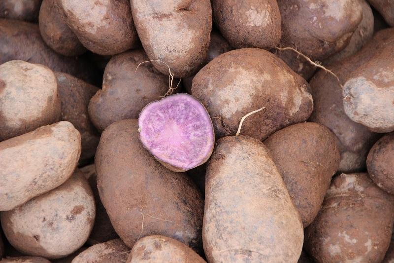 Purple Potatoes Benefits