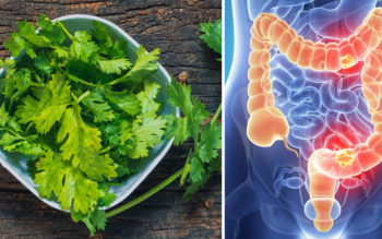 11 Cilantro Benefits & Uses